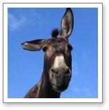 Donkey Library